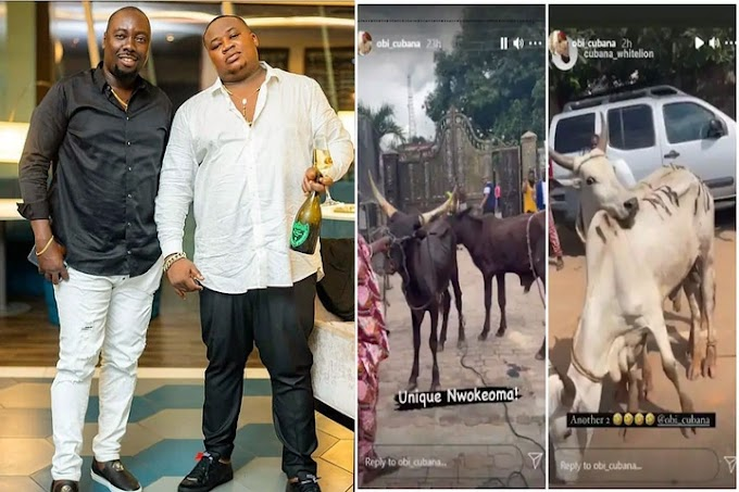 Chief Priest Cubana surprises Obi Cubana with 46 cows to celebrate Mother's funeral in Oba(Video)