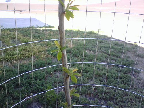 Plum Stick with Leaves