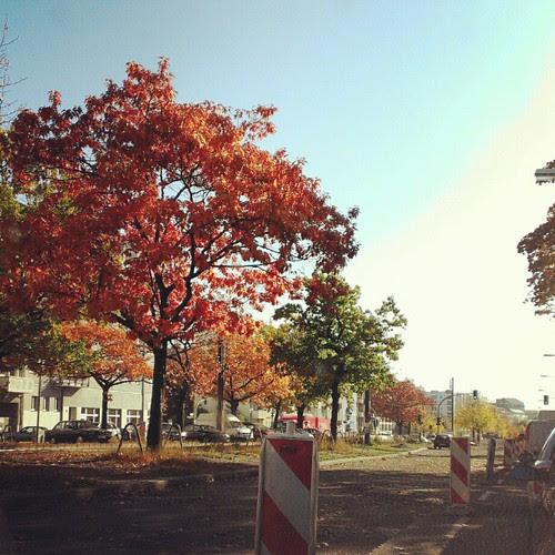 Day 20: 4 o'clock: on the road aka traffic jam in Berlin #FMSphotoaday #fmsphotoadayoctober #Berlin #autumn #fall #tree #orange #sky #trafficjam #instamood #instadaily #instagood