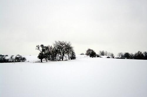 Bagow schneebäume 31.12.2010 13-38-20