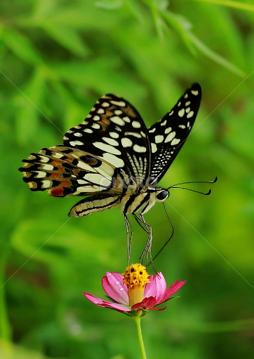 Good Morning Butterfly Insects Spiders Animals Pixoto