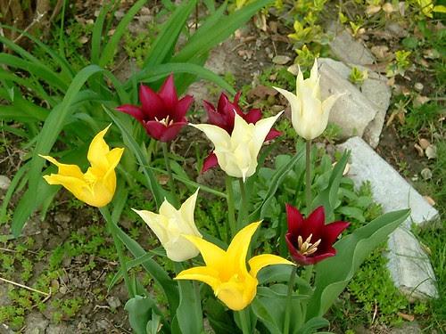 Flowers 2004 1