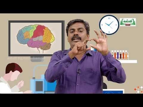 வகுப்பு10 அறிவியல் அலகு 15 நரம்பு மண்டலம் பகுதி 2 Kalvi TV