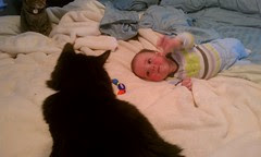 The cats and Elliott