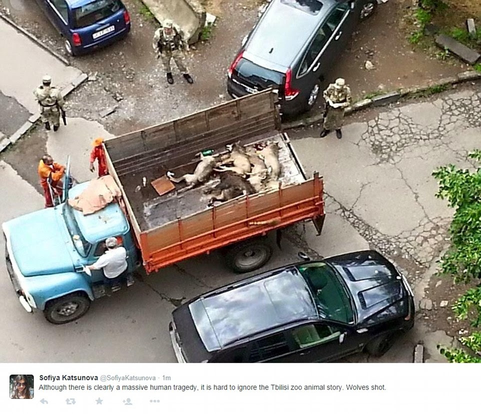 People began posting pictures on Twitter of some of the other animals which are thought to have escaped. This picture reportedly shows wolves in the back of a truck, that were shot dead