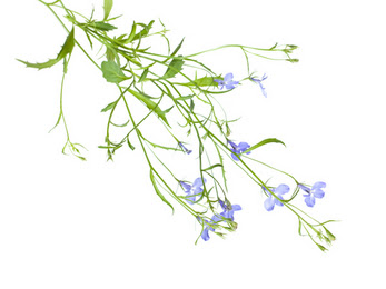Click Here for herbs that may help you quit smoking