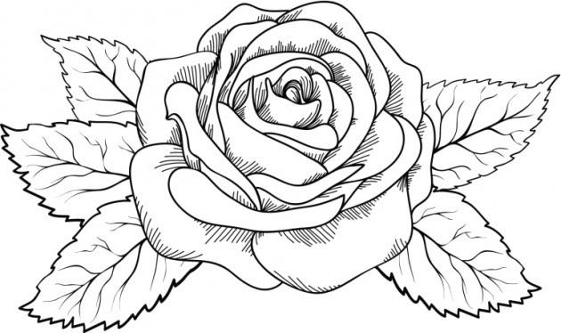 Dibujo Para Colorear Rosa Preciosa Con Ramas
