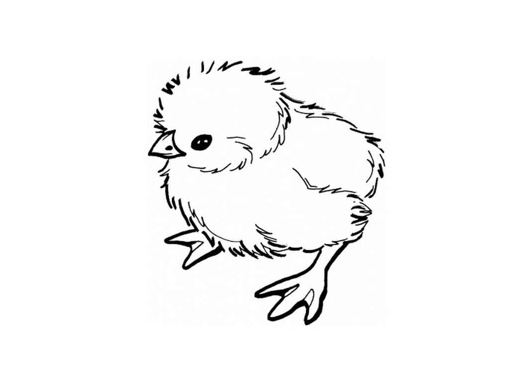 baby chick drawing 32