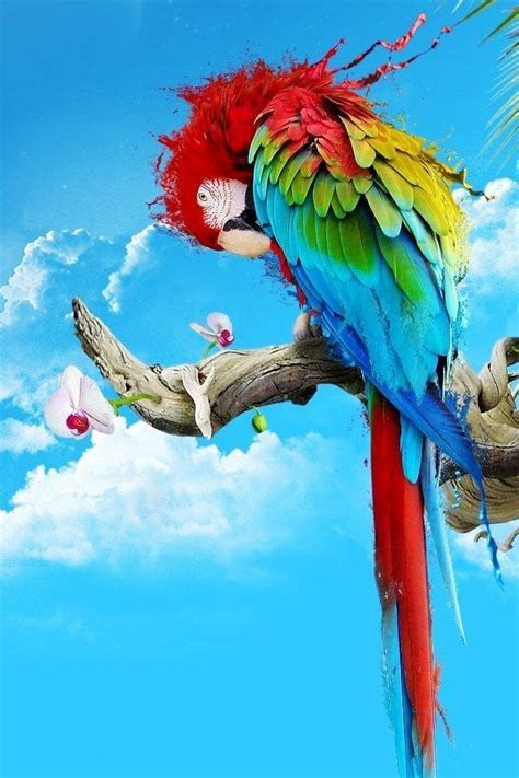 Free Download Colorful Parrot iPhone HD Wallpaper   iPhone