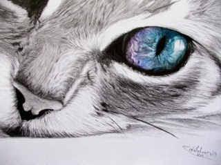 Dibujos De Gatitos A Lapiz