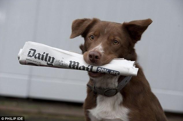 Primeiro com a notícia ...  atender o cão de papel