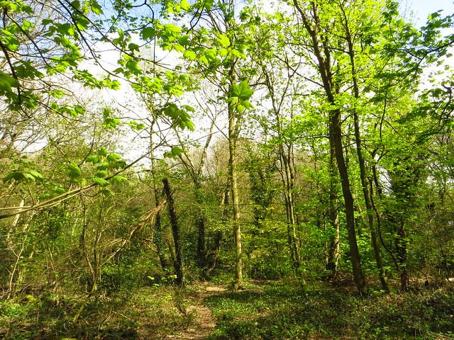 West Heath in Spring