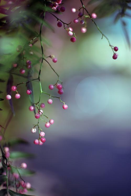 raspberrytart:  Another Black Pepper Shot (by b@u)