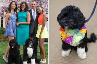 The Former First Dog Bo Has Died After Having Cancer, The Obamas Said
