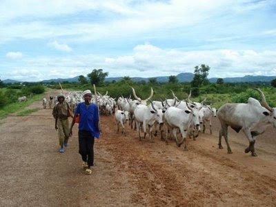 Fulani-Cattle-Reares.jpg