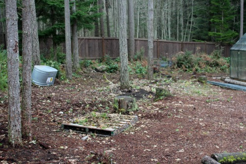 Wooded Backyard Gardening Ideas Photograph Wooded Backyard