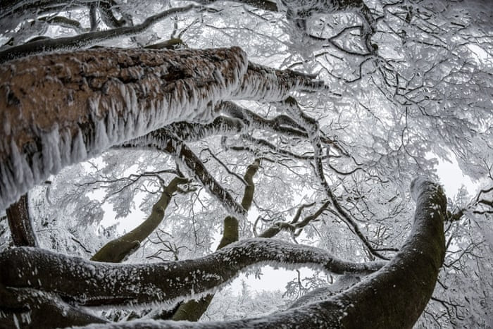 Trees covered in snow on the summit plateau of the 'Grosser Feldberg' mountain in the Taunus area, Hesse, Germany, 03 December 2014.