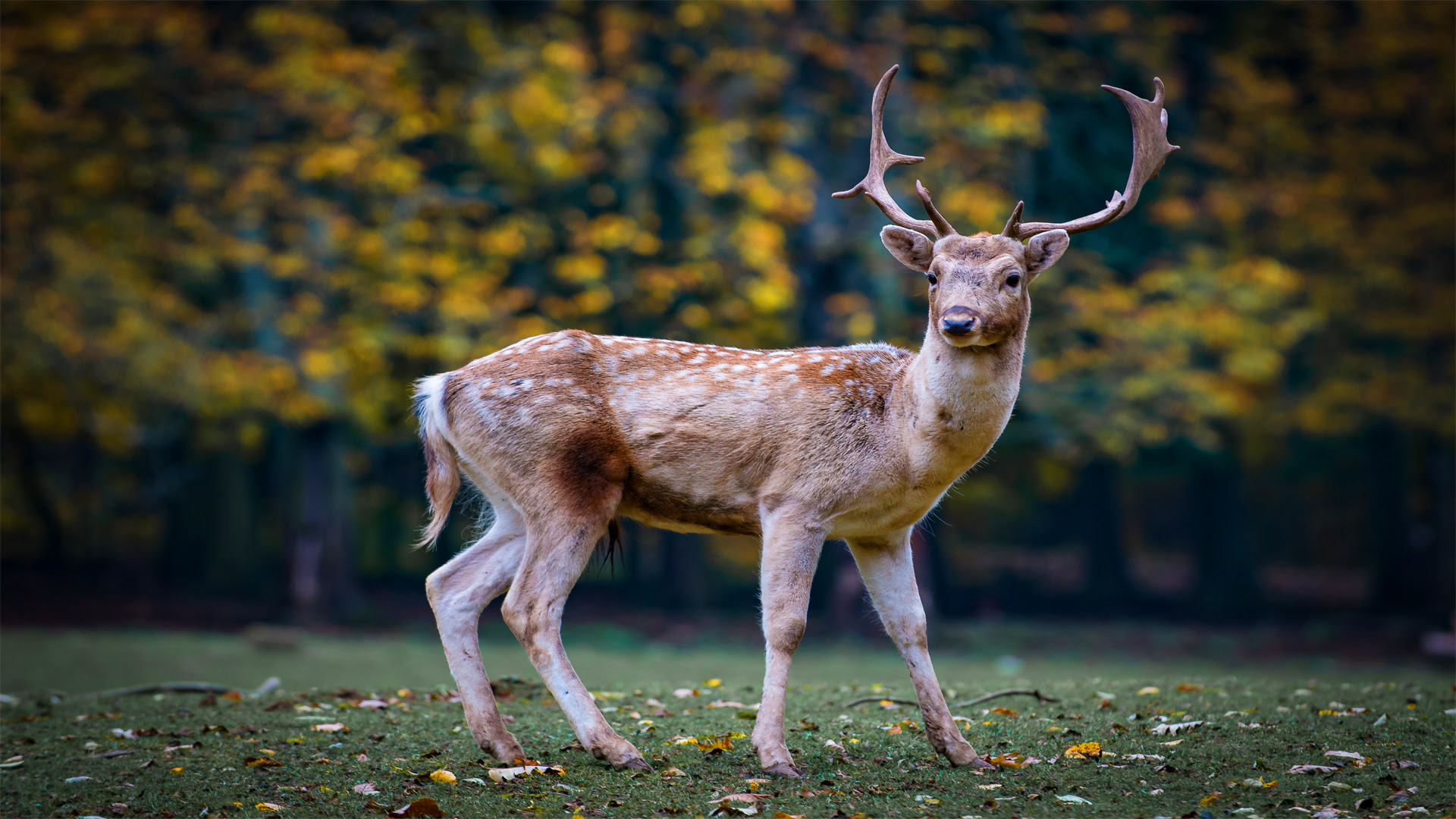 Beautiful Deer!! [1920×1080]
