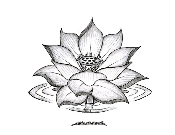 Realistic Lotus Flower Drawing At Getdrawingscom Free For