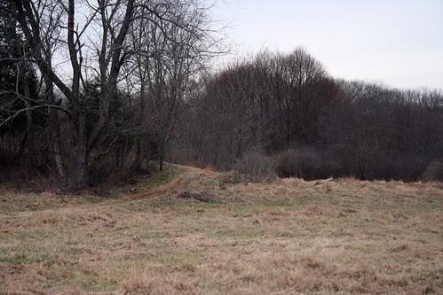 gray fields