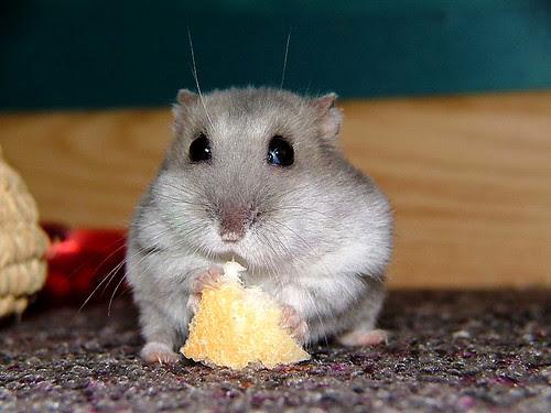 Mmmm Nice Piece Of Bread Jannes Pockele Flickr