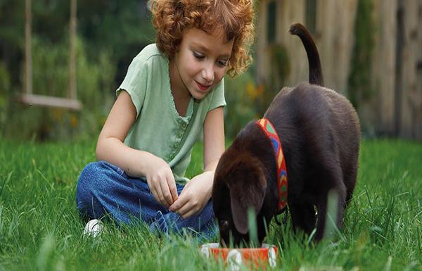 La alimentación de tu cachorro