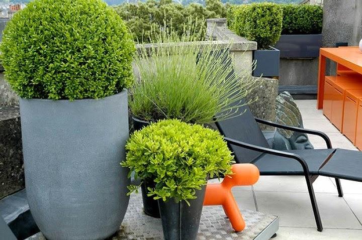 mẫu thiết kế vườn