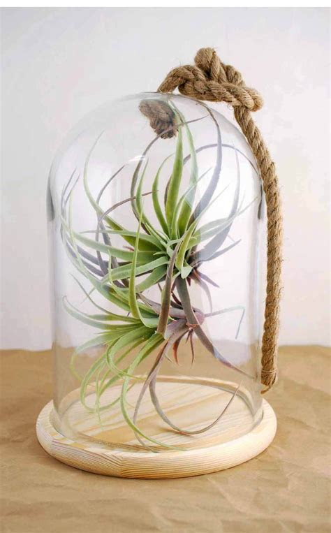 """Bell Jar with Rope 12"""" Nautical"""