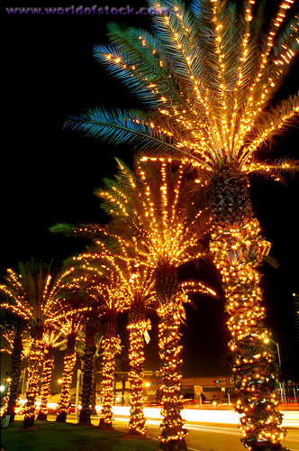 this is why you dont put christmas lights on a palm tree photo unknown host palm trees christmas lights home lighted palm trees rope light palm