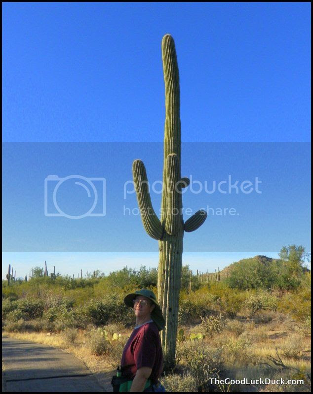 Saguaro cactus Saguaro National Park