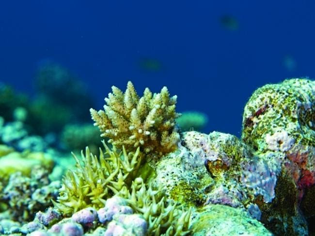 Concerns about the impact to the Great Barrier Reef.