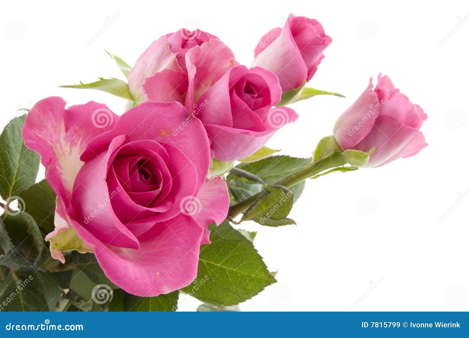 flores rosadas de las rosas 7815799