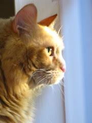 Jasper looking out the window