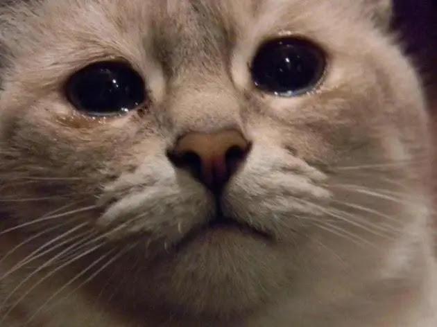 gato-triste-7