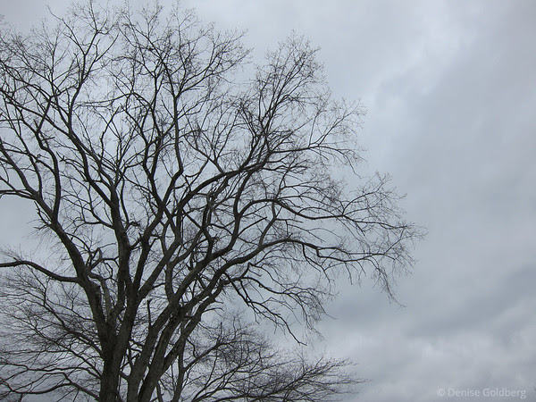 tree branches against cloudy gray sky