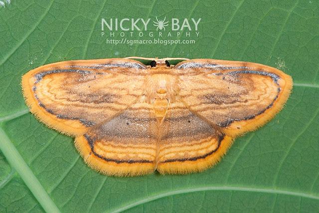 Moth - DSC_9508