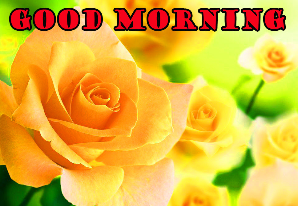 358 Romantic Good Morning Images Wallpaper Pics For Husband Download Hd
