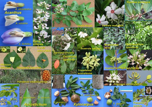 Comparative Guide to Mangroves by JWH Yong