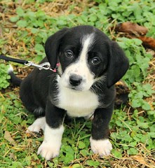 AddisonJan_2012_puppies_045