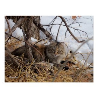 Winter Woodland Feral Cat Print print