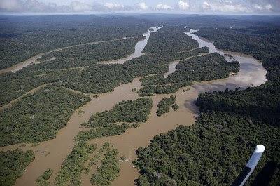 foto aérea da floresta amazônica, vegetação entrecortada por rios com águas amarronzadas