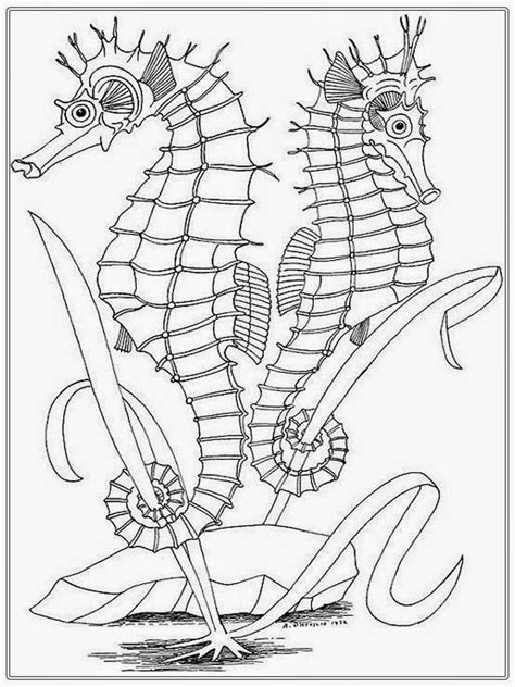 realistic seahorse coloring pages  adult realistic