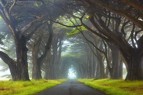 Myst - Point Reyes National Seashore, California