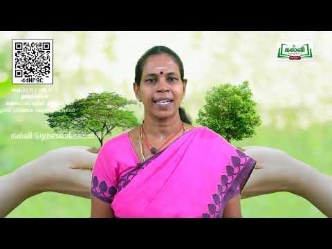 11th Botany வகைப்பாட்டில்(ம)குழுமப்பரிணாம வகைப்பாட்டில் அலகு 5 பகுதி 6 Kalvi TV