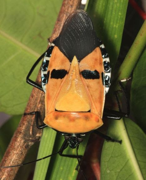 The face of Elvis in a bug (Picture: Caters)