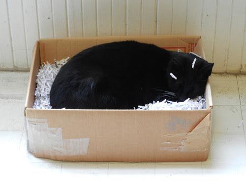 Cat in Box 2809