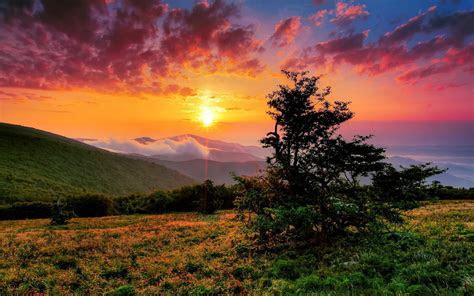 lovely hill tree orange sunset wallpapers lovely hill