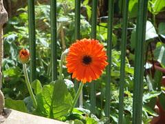 I love orange. by Nancy Dunne