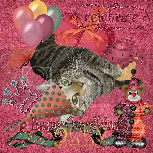 Tabby Cat,Domestic Cat,Birthday,Catblogosphere Cats