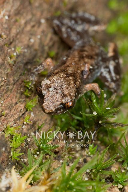 Frog - DSC_9879